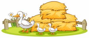 وکتور جوجه اردک